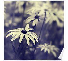 Garden Bokeh Poster