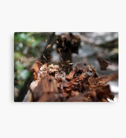 flying woods Canvas Print