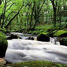 Golitha Falls by Speedster502