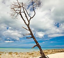 Lone Tree at Havelock Island by Nickolay Stanev