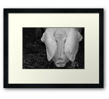 Pig in Black and White Framed Print