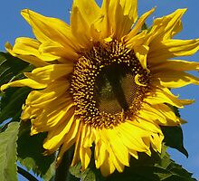 Sunny Sun Flower by MaeBelle