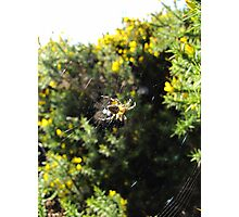 spider on the moors Photographic Print