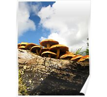 Mushrooms on the moors Poster