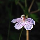 Wild Flower by David Shaw