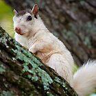White Squirrel by Karen Peron