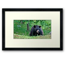 Black Bear on Alert Framed Print