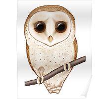Big-Eyed Barn Owl Poster