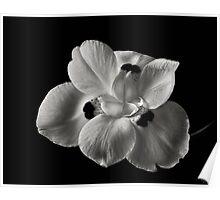 Moorea #2 in Black & White Poster