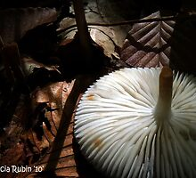 Shroomscape by Marcia Rubin