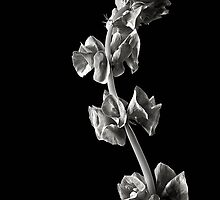 Irish Bells in Black & White by Endre