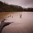 Eagle Tarn, Mt Field National Park by Doug Thost