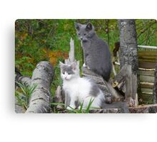Shadow and Spook   Our Pets Canvas Print