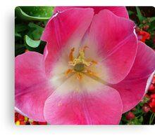 Pink Tulip - Up Close Canvas Print