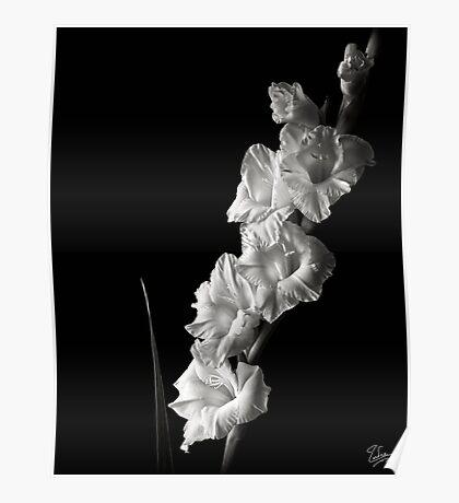 Gladiola #2 in Black & White Poster