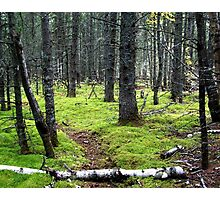 Forest Path Photographic Print