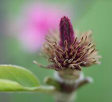 magnolia innards by Brenda Anderson