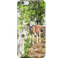 Grazing cows iPhone Case/Skin