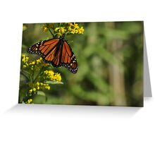 Monarch Butterfly on Goldenrod, As Is Greeting Card