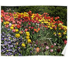 Yearning for Tulips Poster