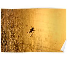 Spider in the Light- Wonder Lake, Illinois Poster