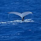A Whale Tail - Humpback Whale by Barbara Burkhardt