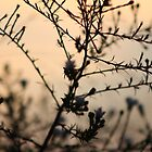 Plants in the Sunset- Woodstock North High School by nielsenca13