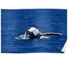 Whale Watch - Hervey Bay - Australia Poster