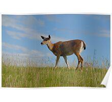 Wildlife in British Columbia, Canada Poster
