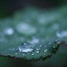 September Rain by Tamara Brandy