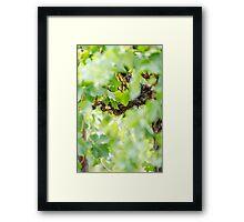 Light Vines Framed Print