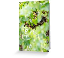 Light Vines Greeting Card