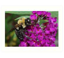 Bee on Butterfly Bush Art Print