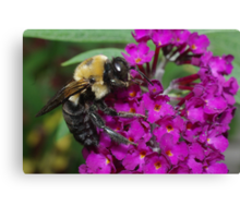 Bee on Butterfly Bush Canvas Print