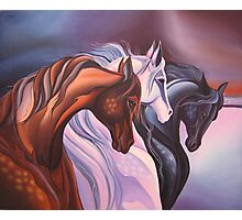 Horse painting, Handwork, Oil painting on canvas Photographic Print