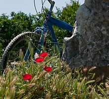 Poppies Bike by phil decocco
