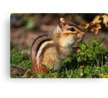 Eastern Chipmunk Canvas Print