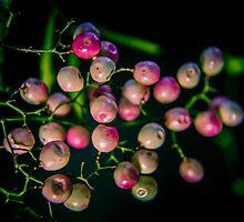 Bright Peppercorn by Angela Lisman-Photography