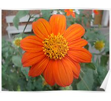 A bright orange flower Poster