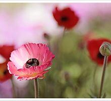 Spring Time  by Sim Baker