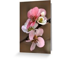 Shades of the Bloom Greeting Card