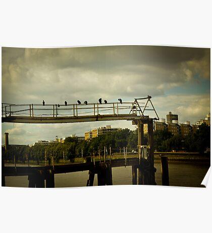 Birds on railings Poster
