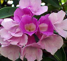 Purple Bouganvillea, Vientiane, Laos. by Angela Gannicott