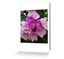Purple Bouganvillea, Vientiane, Laos. Greeting Card