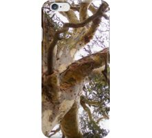 Twisting & Curling as the wind shaped the old Eucalyptus tree. iPhone Case/Skin