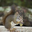 Caught Me! by Jeff Ashworth & Pat DeLeenheer