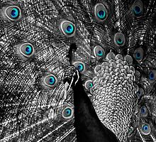 Peacock - Selective Colour by Craig Stronner