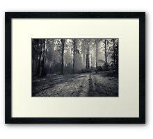 Mount Saint Leonard, Toolangi, Victoria Framed Print