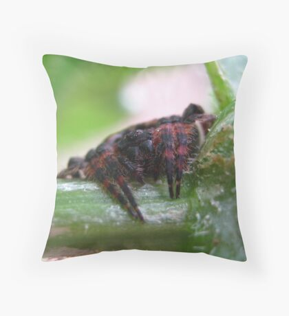 Red & Black Garden Spider Throw Pillow