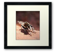 Unknown Critter / Insect Framed Print